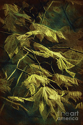 Photograph - Golden Leaves by Jean OKeeffe Macro Abundance Art