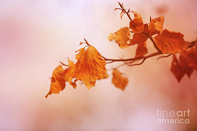 Hjbh Photograph - Golden Leaves... by LHJB Photography