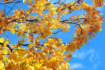 Golden Leaves Ll Art Print