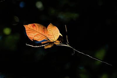 Photograph - Golden Light by Deb Buchanan