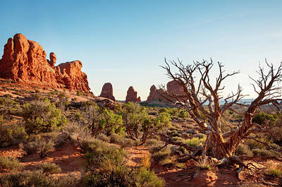 Photograph - Golden Light In Arches National Park by Daniela Constantinescu