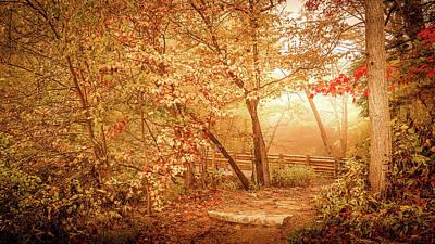 Autumn Photograph - Golden Light In Woods by Art Spectrum