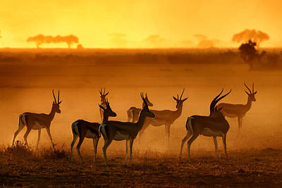 Antlers Photograph - Golden Light by Mathilde Guillemot