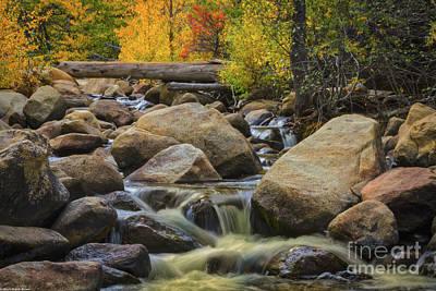 Photograph - Golden Light Of Autumn by Mitch Shindelbower