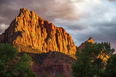 Photograph - Golden Light On Watchman - Zion by Jay Moore