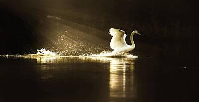 Photograph - golden Light by Rose-Marie Karlsen