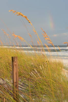 Photograph - Golden Light, Sea Oats, And A Rainbow by Carla Parris