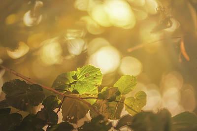 Photograph - Golden Light by Vincent Pelletier