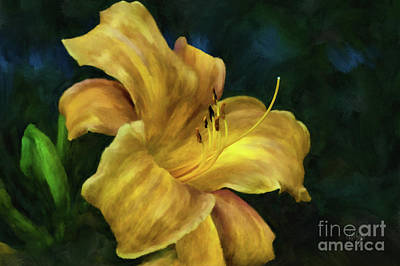Digital Art - Golden Lily by Lois Bryan