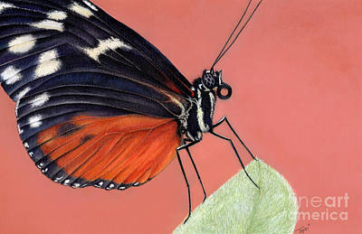 Painting - Golden Longwing by Tanya Tyrer