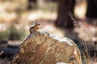 Photograph - Golden-mantled Ground Squirrel by Saija Lehtonen