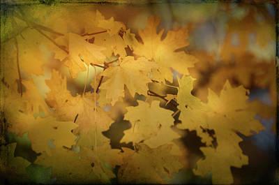 Photograph - Golden Maple Leaves Part II by Saija Lehtonen
