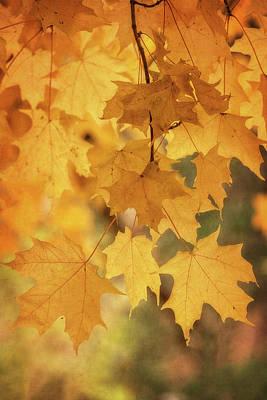Photograph - Golden Maple  by Saija Lehtonen