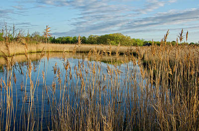 Photograph - Golden Marsh by Donna Doherty