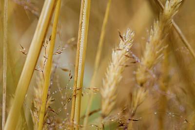 Photograph - Golden Meadow by Robert Potts
