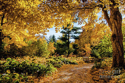 Photograph - Golden Moment by Tina Hailey