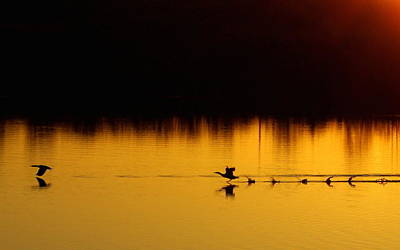 Mark Wagner Wall Art - Photograph - Golden Morning Flight by Mark Wagner