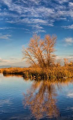 Photograph - Golden Morning by Kathleen Bishop