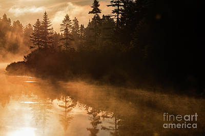 Photograph - Golden Morning by Mircea Costina Photography