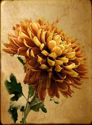 Mums Digital Art - Golden Mum by Jessica Jenney