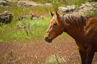 Photograph - Golden Mustang Stallion by Waterdancer
