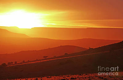 Photograph - Golden Namibia At The Morning by Wibke W