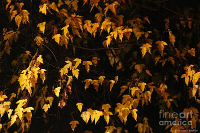 Photograph - Golden Nights by Susan Herber