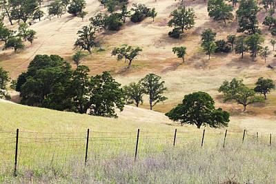 Photograph - Golden Oak Land 2 by Lori Mellen-Pagliaro