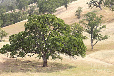 Photograph - Golden Oak Land by Lori Mellen-Pagliaro