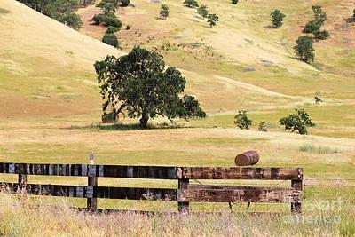 Photograph - Golden Oak Lands 3 by Lori Mellen-Pagliaro