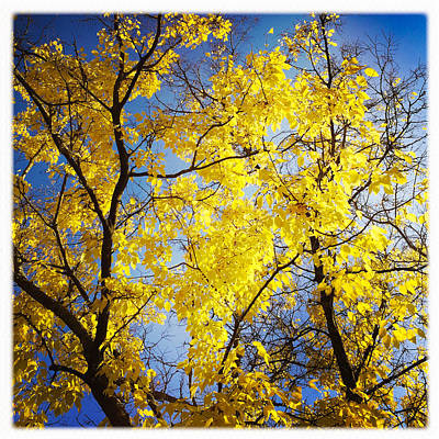 Golden Photograph - Golden October Tree In Fall by Matthias Hauser
