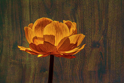 Photograph - Golden Orange #g0 by Leif Sohlman