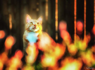 Photograph - Golden Orange Tabby by Dee Browning