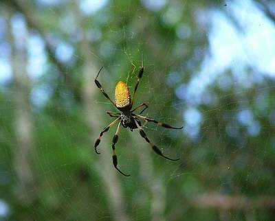 Golden Orb Weaver 1 Art Print by Bruce W Krucke