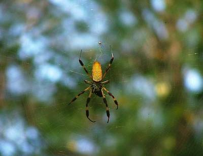 Golden Orb Weaver 2 Art Print by Bruce W Krucke