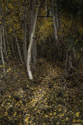 Photograph - Golden Path by Dusty Wynne