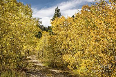 Photograph - Golden Path by Lynn Sprowl