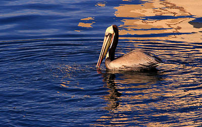 Photograph - Golden Pelican  by Robin Street-Morris