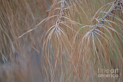 Photograph - Golden Pines Abstract by Maria Urso