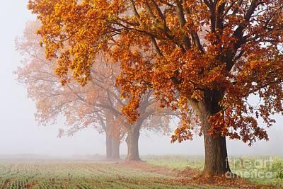 Photograph - Golden Polish Autumn by Jaroslaw Suchozebrski