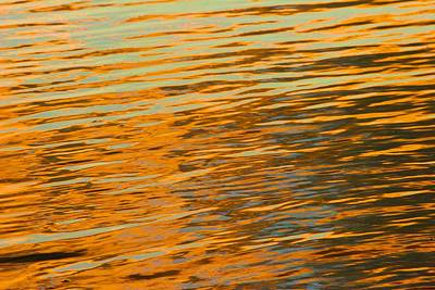 Photograph - Golden Pond by Polly Castor