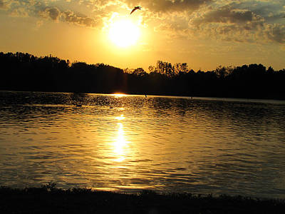 Photograph - Golden Pond by Scott Hovind