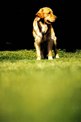 Photograph - Golden Pooch by Emily Stauring