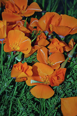 Photograph - Golden Poppies by Tikvah's Hope