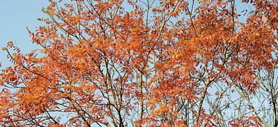 Photograph - Golden Rain Tree by Tim Gainey