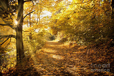 Photograph - Golden Rays Of Autumn by Nick Jene