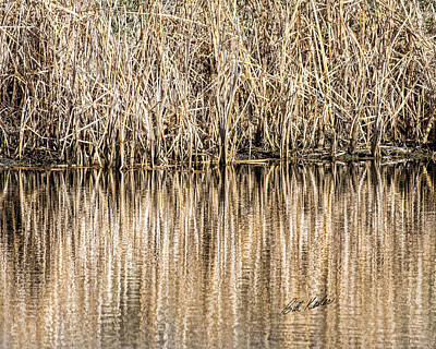 Photograph - Golden Reed Reflection by Bill Kesler