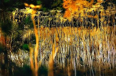Photograph - Golden Reeds On The Marsh by Nadalyn Larsen