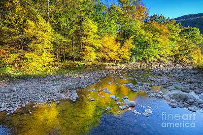 Photograph - Golden Reflection Near Dolly Sods West Virginia by Karen Jorstad