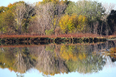 Photograph - Golden Reflections by Elizabeth Winter